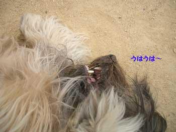 b0090938_1657731.jpg