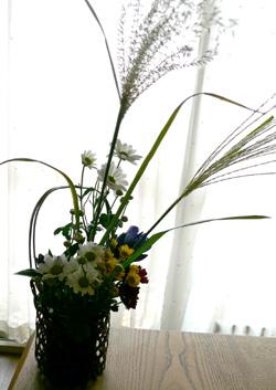 きょうは「菊の節句」_a0017350_19542536.jpg