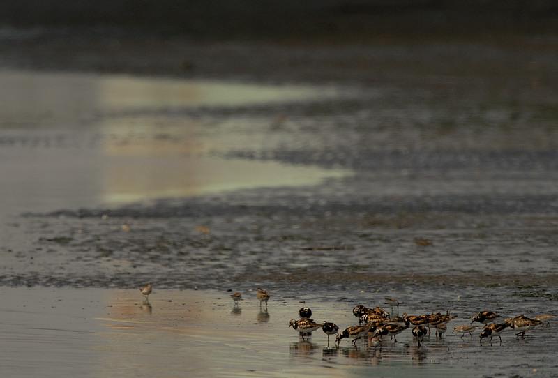 干潟の野鳥_d0099854_21352156.jpg