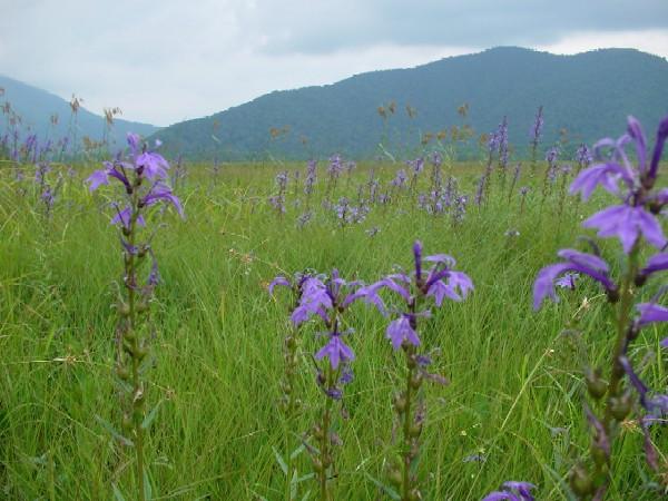 高山植物レビュー(2005年:山で出会った花々)_c0119160_13532736.jpg