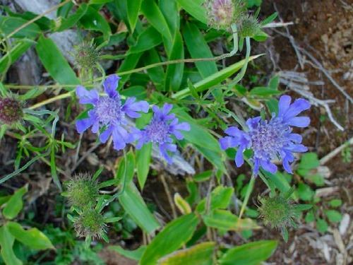 高山植物レビュー(2005年:山で出会った花々)_c0119160_14142576.jpg