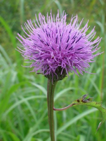 高山植物レビュー(2005年:山で出会った花々)_c0119160_1425359.jpg