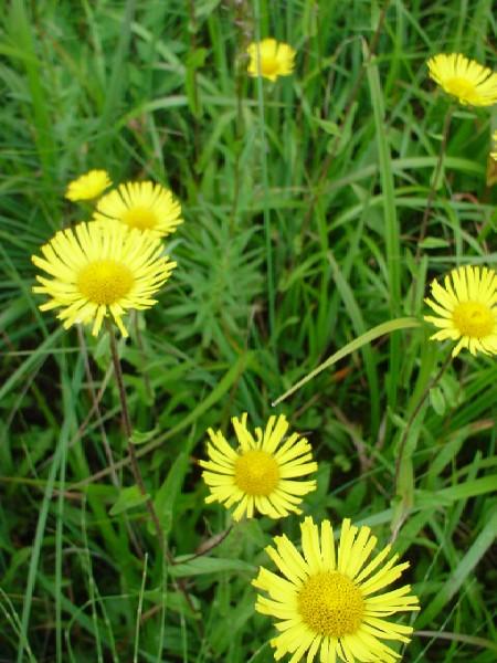 高山植物レビュー(2005年:山で出会った花々)_c0119160_1432197.jpg