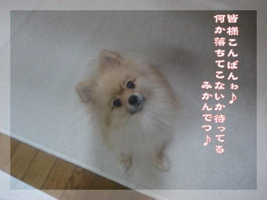 b0078073_17182146.jpg