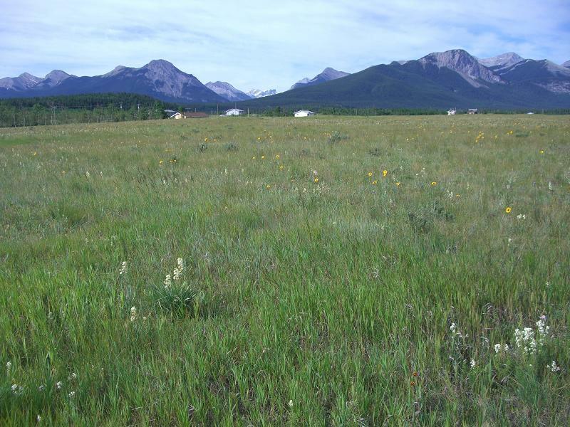 カナダの草原