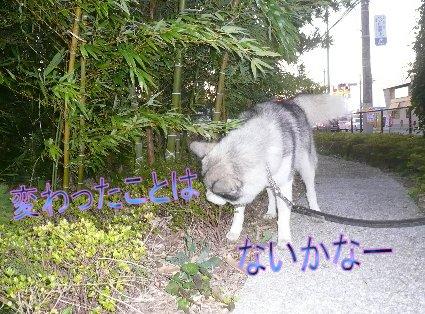 f0112407_14404396.jpg