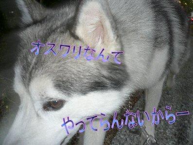 f0112407_14413215.jpg