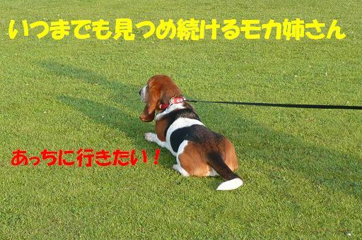f0121712_22233365.jpg
