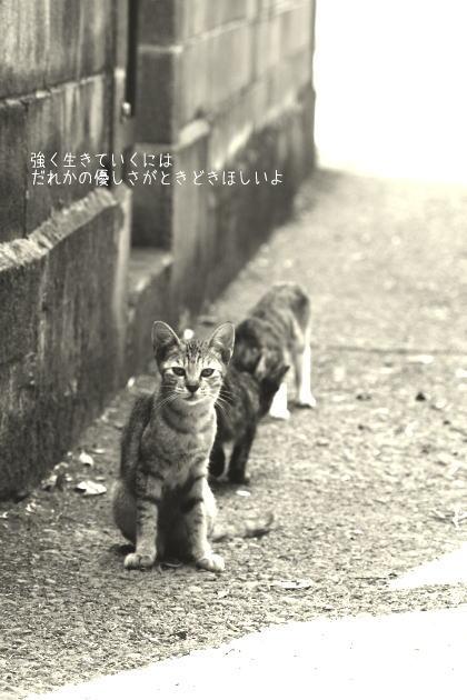 路地裏を生きる猫たち_d0006718_6115261.jpg