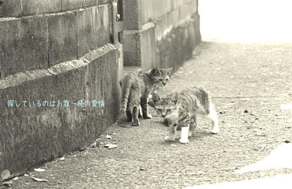 路地裏を生きる猫たち_d0006718_6124815.jpg