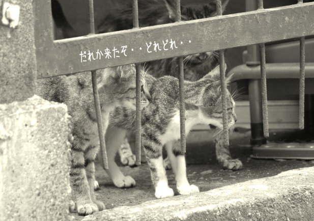 路地裏を生きる猫たち_d0006718_7165169.jpg