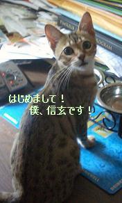 c0132537_1273317.jpg