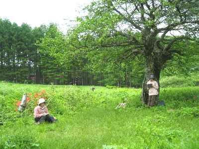 旧御射山の山梨の老樹の下で_a0073540_21292071.jpg