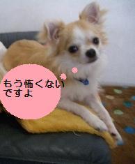 c0132205_206387.jpg