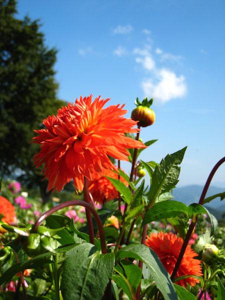 f0120317_17575444.jpg