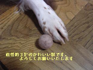 b0113725_1893588.jpg