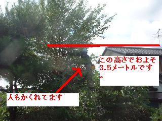 久々の大物・・笑_f0031037_1893854.jpg