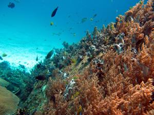 南国の海といえば、やっぱり透明度_f0144385_2031180.jpg