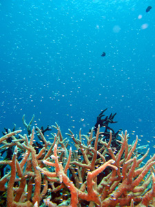 南国の海といえば、やっぱり透明度_f0144385_20345592.jpg