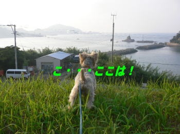 d0013645_22422858.jpg