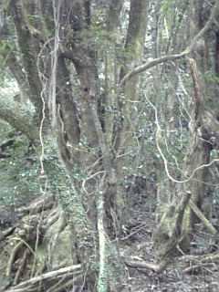 樹齢 何年でしょうか?_f0099147_123475.jpg