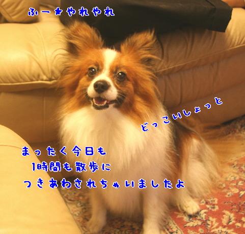 d0013149_1113695.jpg