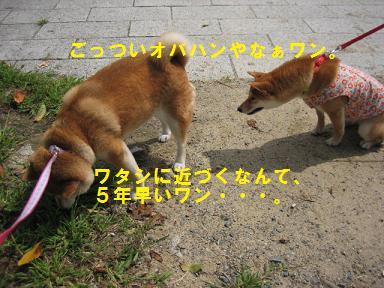 c0049950_1959369.jpg
