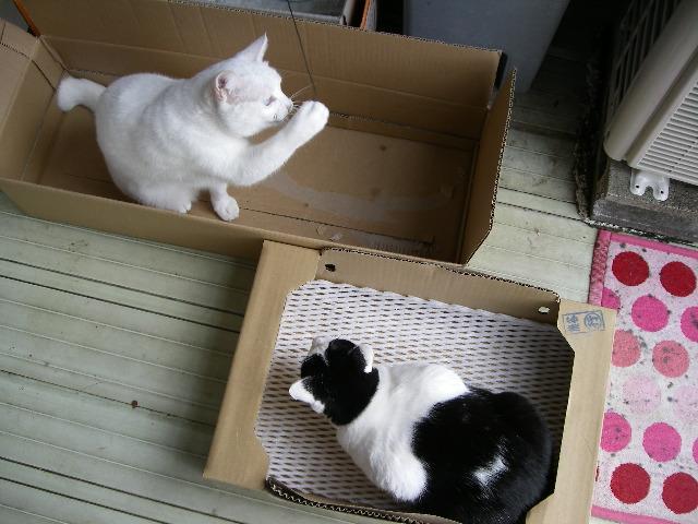 は~い、おニューの箱です。_d0116059_11444364.jpg