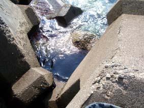 海だ~っ!_c0108174_223538.jpg