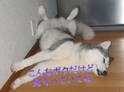 f0112407_11298.jpg