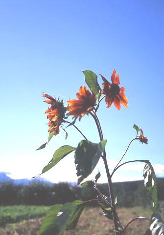 f0135735_0374212.jpg