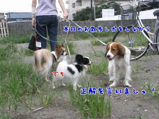 d0013149_1195174.jpg