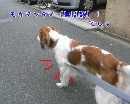 d0013149_140041.jpg