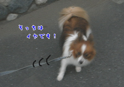 d0013149_145518.jpg