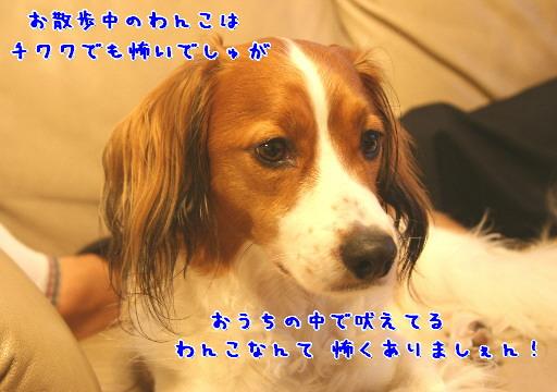 d0013149_1492266.jpg