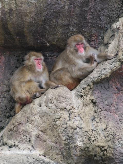 市川動物園にて_f0018464_639951.jpg