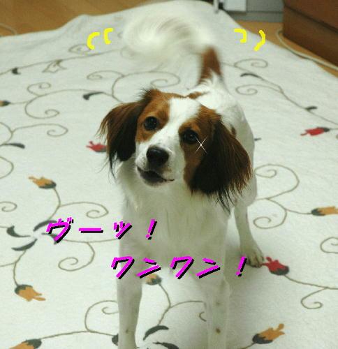c0075585_7555195.jpg