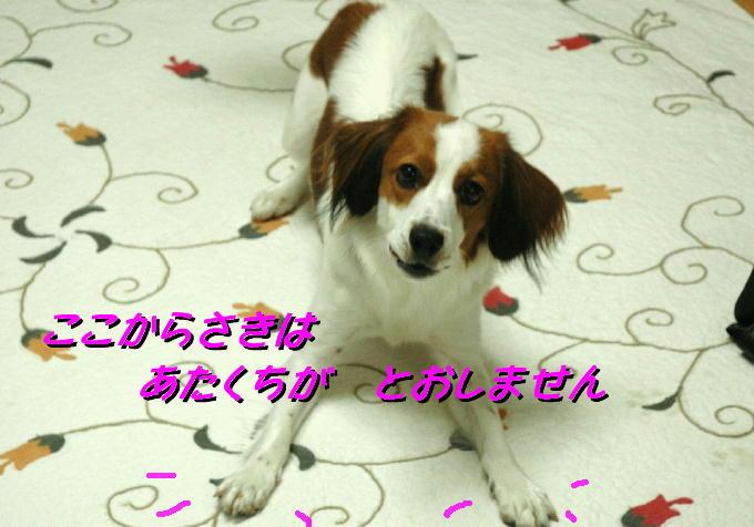 c0075585_7563375.jpg