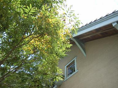 初秋の庭_d0087595_1053790.jpg