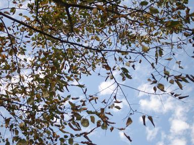 初秋の庭_d0087595_106929.jpg