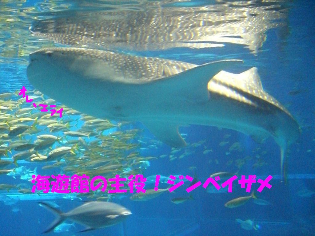 c0113109_05738100.jpg