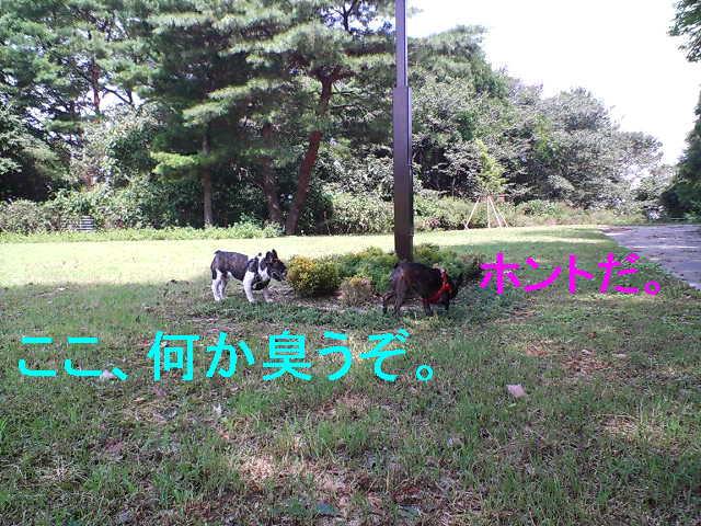 b0076733_20114380.jpg
