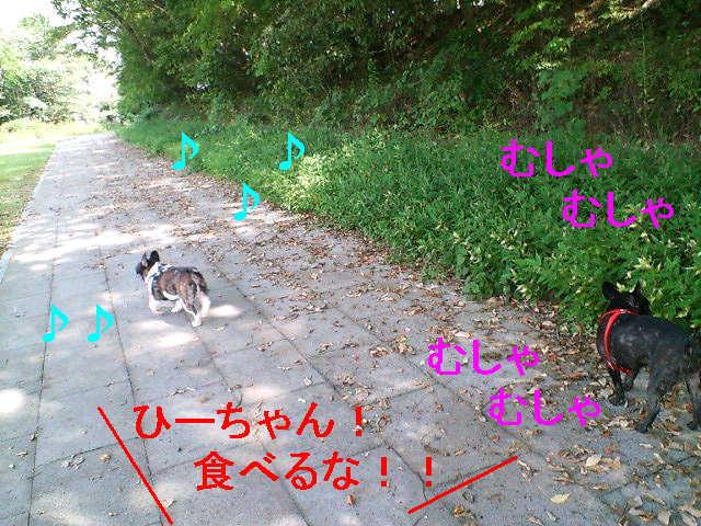 b0076733_20122776.jpg
