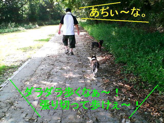 b0076733_20124388.jpg