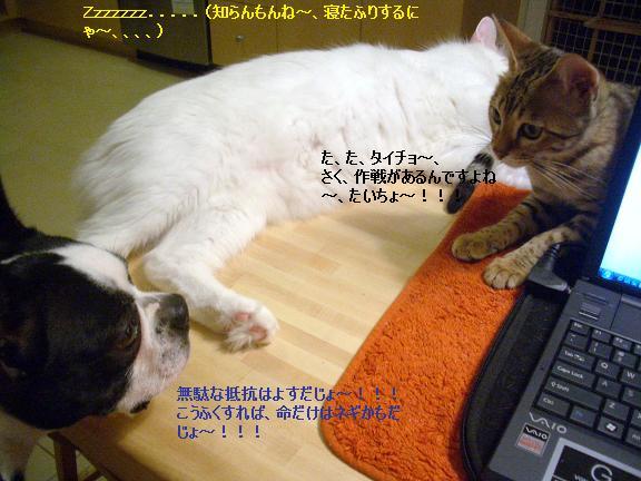c0132537_11184583.jpg