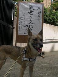 今年も琉球朝顔が咲いたよ_b0025947_19584198.jpg