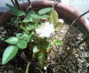植物の魅力_b0102193_1253268.jpg