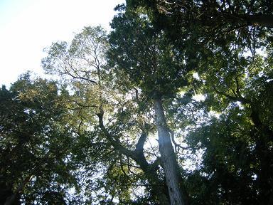 トトロの森の陽だまりの家_d0087595_2194994.jpg