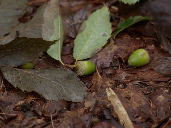 森は秋の気配_c0137403_14501966.jpg