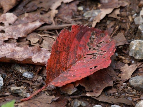 森は秋の気配_c0137403_14561659.jpg